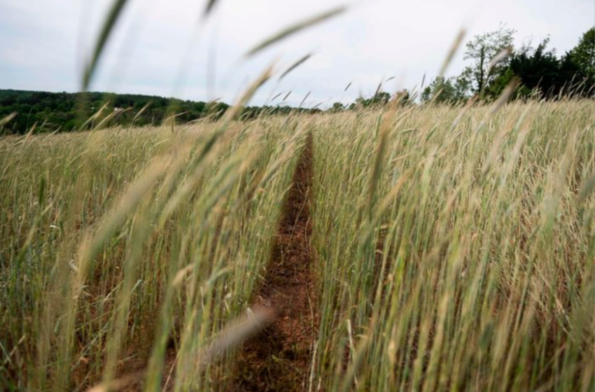 The Federal Government Is Giving Big Incentives for Voluntary Crop Destruction
